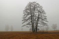 Landscape, Fog, Haze, Tree