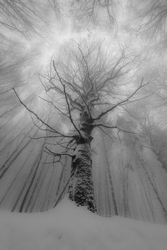 Cathedral of snow. #trees #photography | Via Flickr, photo credit: M. Braun