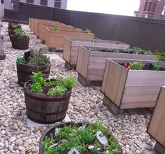 The LCL  Almost 400 feet above 42nd Street, on the 41st floor of The Westin New York Grand Central, The LCL's chef Brian Weiler tends to a 1,300-square-foot rooftop garden himself, planting and watering 11 vegetable beds and nine whiskey barrels full of herbs. This time of year, Weiler harvests lots of herbs, arugula, mesclun, and, of course, pounds of heirloom tomatoes you can taste in the gazpacho. www.thelclnyc.com