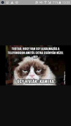 Grumpy Cat, Cat Memes, Hungary, Smiley, Haha, Funny Stuff, Life Hacks, Jokes, Funny Things