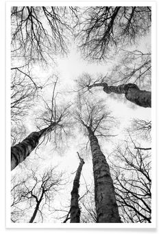 Everglades - Shot By Clint. Look up! Black and white trees photography.