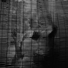 Vivian MaierUntitled, undated
