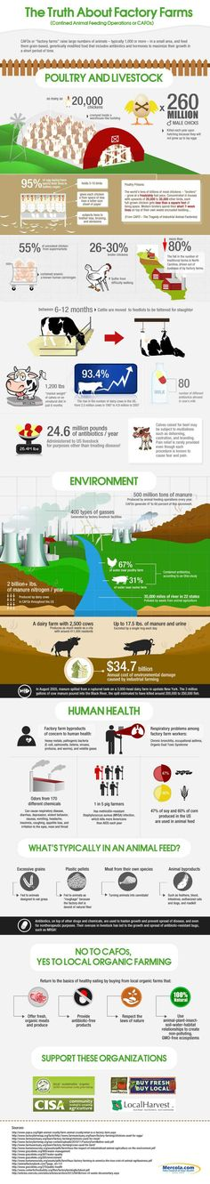 The Truth About Factory Farms [Infographic] | Daily Infographic