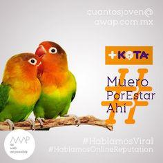 """No me cuelgues del pajarito""  Idea creativa @davichobandazza Copy's @reneanzorena @tahusin @davichobandazza Artes @reneanzorena Agencia: awap.com.mx  #maskota #maskotastore #maskotamaltrataanimales #maskotamata  #HablamosDigital #HablamosViral #HablamosDiseño #HablamosCliente  #creative #true #awappers #digitalmarketing #digitalagency #mexico #df #designPorn #AWAP #html #css #responsivo #OnlineReputation #marketingdigital #agenciadigital"
