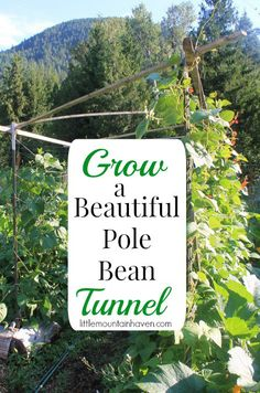 Grow a Pole Bean Tunnel