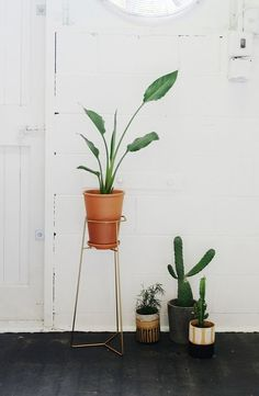 Plant holder nz vintage gold by Trestle Union