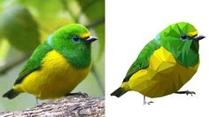 Oiseau sur Adobe Illustrator