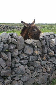 Donkey on the Wall . He wants to greet people driving by..