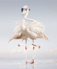 Flamingos.  Asombroso!