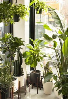 826 Best House Plants Home Decor Ideas From The Barn Nursery