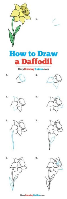 Learn How to Draw a Daffodil: Easy Step-by-Step Drawing Tutorial for Kids and Beginners. #Daffodil #DrawingTutorial #EasyDrawing See the full tutorial at https://easydrawingguides.com/how-to-draw-a-daffodil/.