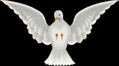 Resultado de imagem para pomba espirito santo