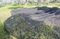 Huile d'olive de la vallée des Baux-de-Provence L'huile d'olive de la vallée des Baux-de-Provence est protégée par une appellation d'origine contrôlée (AOC) depuis un décret pris par l'INAO le 27 août 1997 et paru au Journal officiel n° 199 le 28 août...