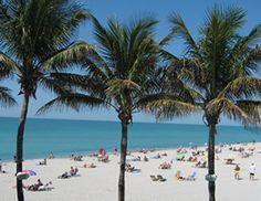 Apparently Venice Beach, Florida is the shark-tooth capital of the world. Gotta go beachcombing there!