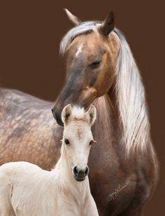 Dappled sooty palomino with foal