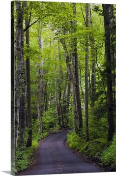 Premium Thick-Wrap Canvas Wall Art Print entitled Roaring Fork Road winding through spring forest, Great Smoky Mountains National Park, Tennessee, None