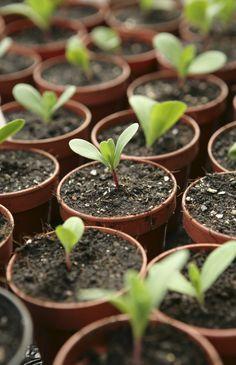 Success in land based social enterprise