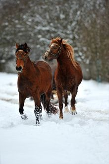 7 Tips for Maintaining Horse Health in Cold Weather