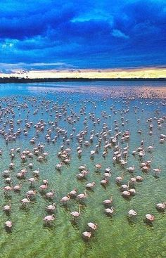 Salt Lake in Larnaca District, Cyprus | by Andreas Philiastides
