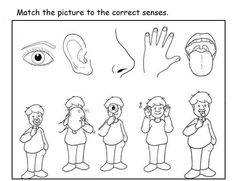 Kids can match the images with corresponding senses in