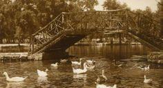 Parque Guadiana, Lago de los Patos