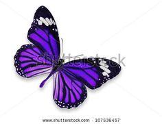 purple butterfly tattoo designs - Google Search