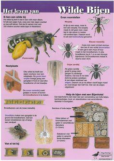 Kaart Het leven van wilde bijen