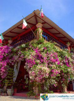 1000 images about vallarta botanical gardens on pinterest - Puerto vallarta botanical gardens ...