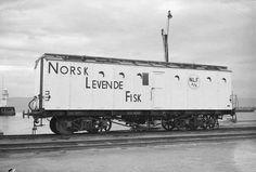 DigitaltMuseum - Norsk Levendefisk fot. forsk. jernbanevogner