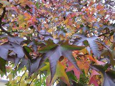 Symphony of autumn colours.
