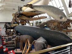 Twitter / deniz_graham: Natural history museum :-) ...