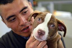Breathe easy—you can still keep your animal companion!
