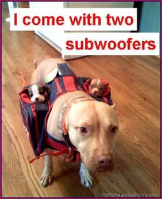 I come with two subwoofers