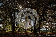Photo about Beautiful autumn view in park , sunlight backgrounds. Image of light, beautiful, image - 81092840 Autumn Trees, Sunlight, Sunshine, Backgrounds, Stock Photos, Seasons, Park, Beautiful, Fall Trees
