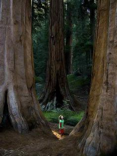 Redwood..I hope my great grand children will gaze in wide eyed wonder at nature we have not destroyed(and if they get the chance to sit it out or dance I hope they DANCE.)