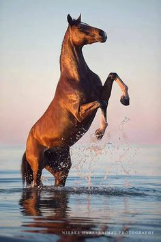 (93) Horses & Freedom - Photos