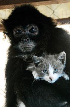 ✻⁓Cappi     monkey + kitten = happiness
