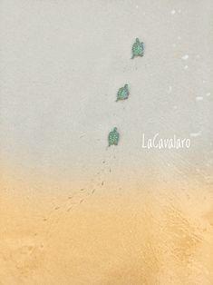 Tartaruga por onde passa, leva lembranças, e deixa apenas pegadas 🐢