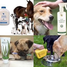 Aloe Vera for animals