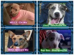 Dogs Shepard Mix, Paws Rescue, Collage Maker, Photo Editor, Pets, Animals, Animales, Animaux, Animal