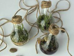 DIY+recycled+lightbulb+terrariums.jpg