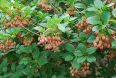 Best shrubs for your garden Tree Canopy, Trees To Plant, Colorful Flowers, Shrubs, Garden, Nature, Vancouver, Yellow Sun, Sun Light