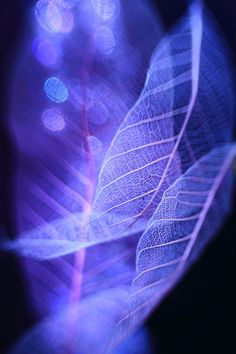 Beautiful macro photos of leaves using lighting and lens effects. Photographed by Shihya Kowatari.