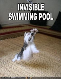 humor, funny funny funny, swimming cat,