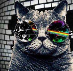 wallpaper celular gato de oculos - Pesquisa Google