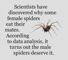 Why female spiders eat their mates…