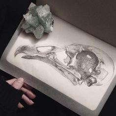 juliaelizabethstasio:  little vulture baby. ❀ 今日めっちゃ疲れたから下絵しか描かなかった。