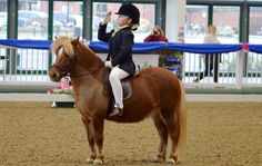 Eight-year-old Holly Brereton and her Shetland pony Shanlock Vera were competing at their first unaffiliated dressage championship