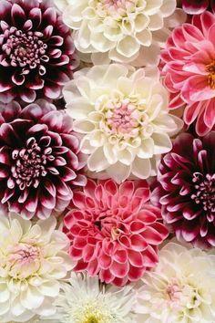 #fleurs #hortensia #rose #bouquet #mariage