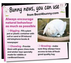 Bunny tip of the week - encourage natural behaviour Rabbit Cages, House Rabbit, Pet Rabbit, Bunny Toys, Baby Bunnies, Bunny Rabbits, Lana Banana, Rabbit Information, Dwarf Bunnies